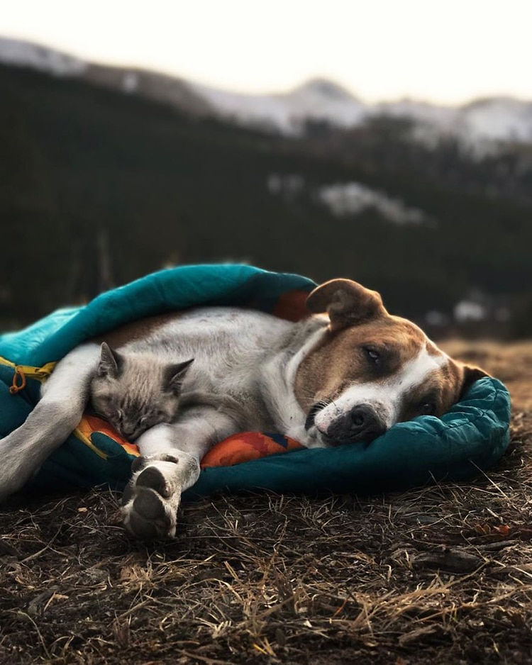 Henry the Colorado Dog And Baloo the cat snuggle in a sleeping bag