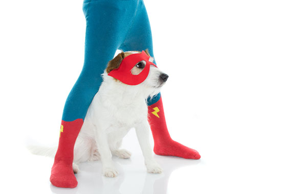 Dressing up pets for fun with Rubie's Costumes at BaxterBoo.com