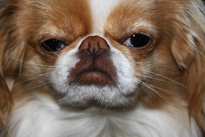 Should You Trim Your Pet's Whiskers | BaxterBoo