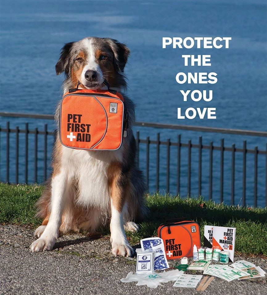 Canine Friendly First Aid Kit