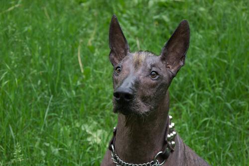 Top 5 Weirdest Dog Breed Names Baxterboo