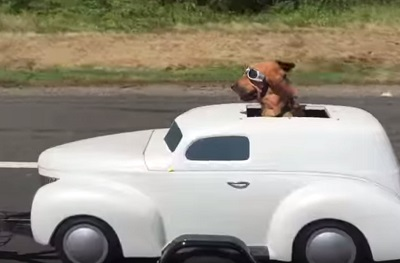 Watch This: Dog Catches Cool Ride With Biker Buddy