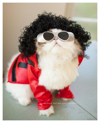 Can Cats Wear Halloween Costumes? & Can Cats Wear Halloween Costumes? | BaxterBoo