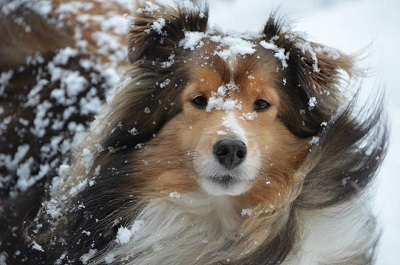 Image result for cute animals in snow