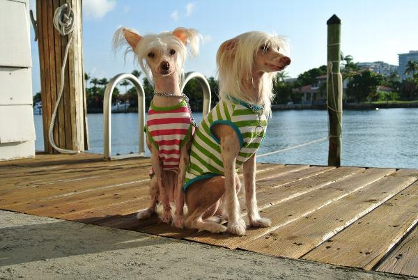 Chinese Crested Clothes