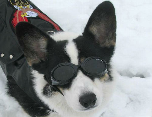 f4e8357333 You ve seen so many cute photos of dogs wearing their Doggles while  enjoying summer fun. People have sent us photos of dogs in sunglasses while  camping
