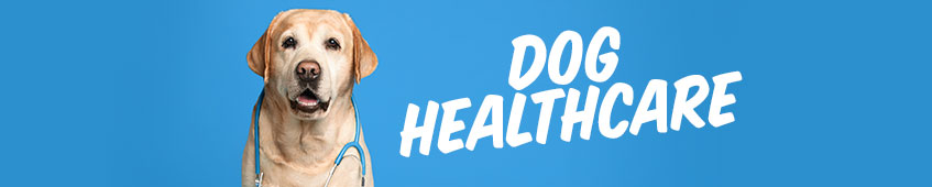 Dog Healthcare