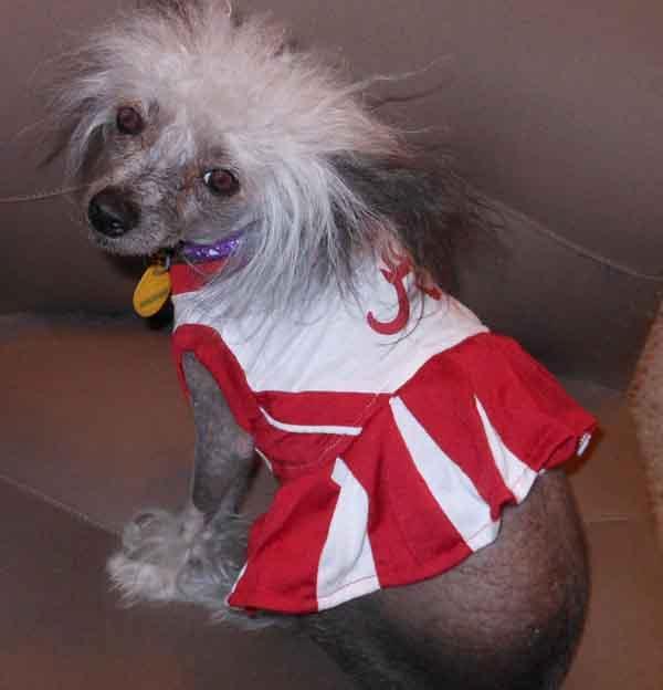 info for 9fd21 f42b4 Alabama Crimson Tide Cheerleader Dog Dress