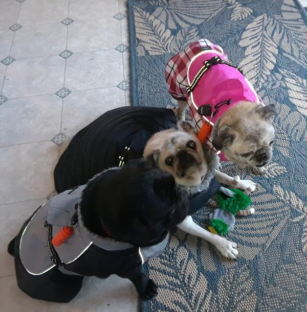 Alpine All Weather Dog Coat By Doggie Design Black And Gray