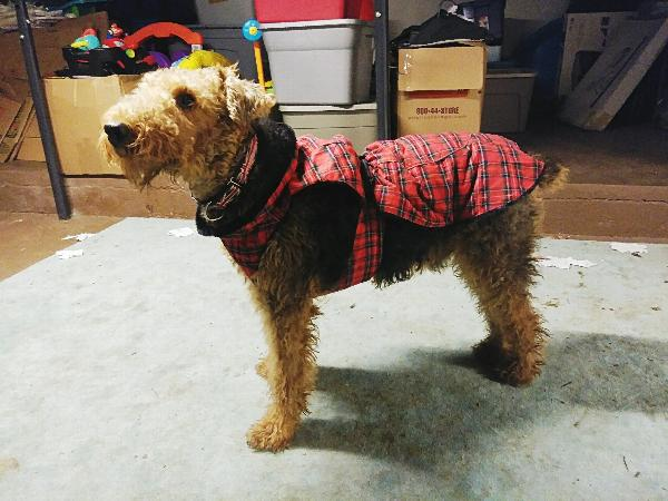 Image result for The Most Effective Online Dog Clothes Store For Winter