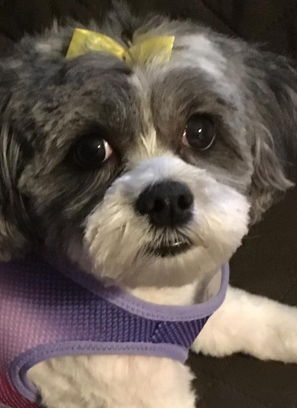 American River Choke Free Dog Harness By Dogg Baxterboo
