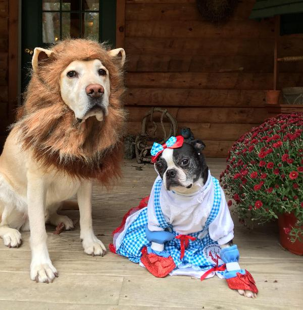 Pearl and Sherman & King of the Jungle Lion Halloween Dog Costume with Same Day Shipping ...
