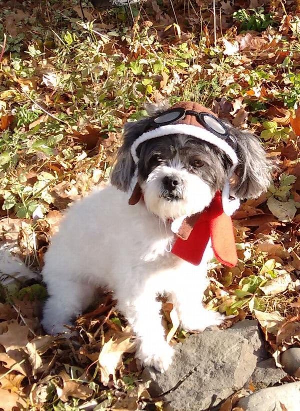 76cfbe0044e Aviator Dog Hat by Dogo - Brown