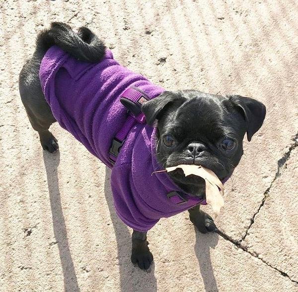 Barking Basics Dog Hoodie - Purple  c4bde7cb8