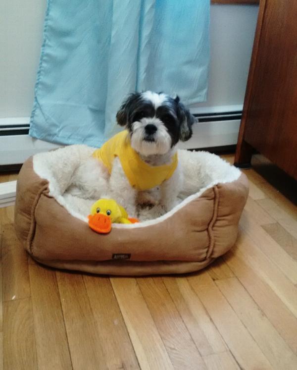 Barking Basics Dog Tank Shirt Yellow With Same Day