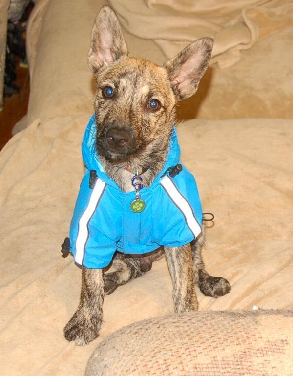 Shipping Dog To Rhode Island
