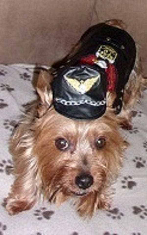 Biker dawg motorcycle dog jacket by doggie design black for Dog daycare santa monica