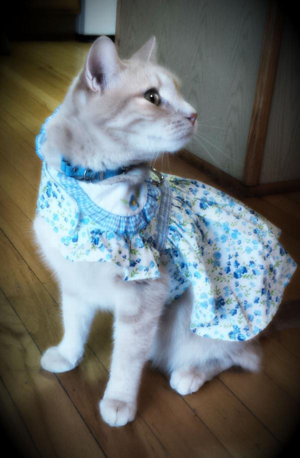 blue-belle-floral-dog-dress-by-doggie-design-16943.jpg