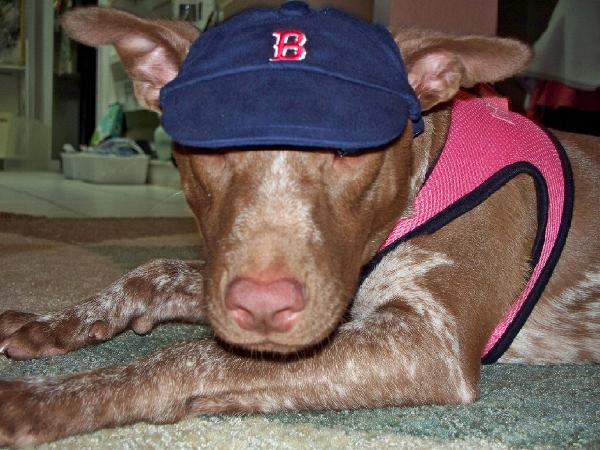 Boston red sox dog hat with same day shipping baxterboo lucy voltagebd Images