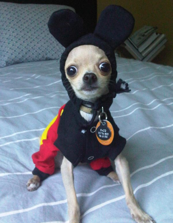 Minnie Mouse Large Dog Costume