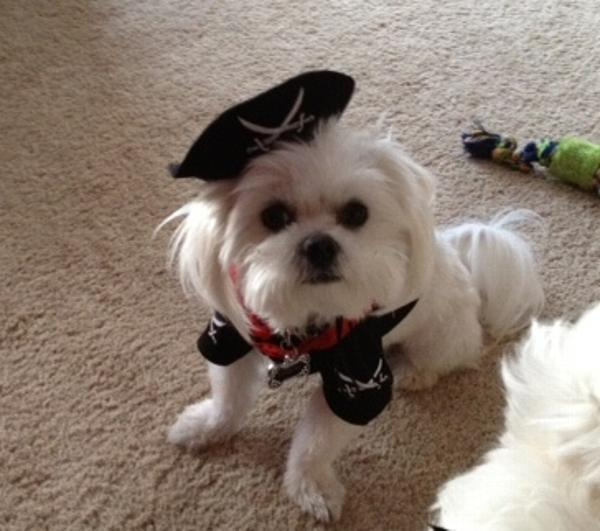 Captain Barbosa & Caribbean Pirate Dog Costume | BaxterBoo