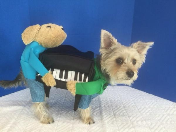 carrying piano dog costume baxterboo. Black Bedroom Furniture Sets. Home Design Ideas