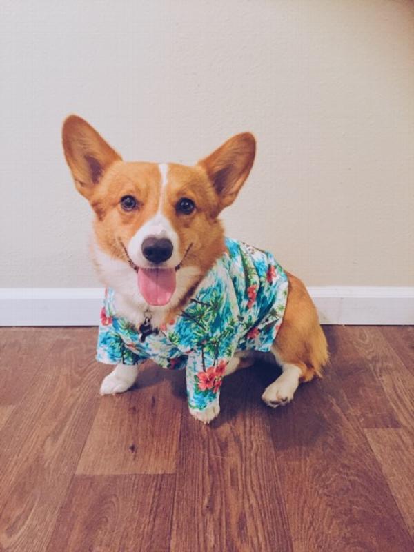 Casual Canine Hawaiian Breeze Camp Shirt for Dog