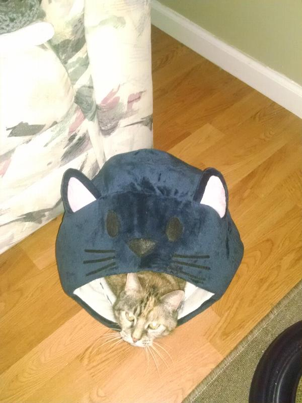 cat-is-good-cat-cave-bed-blue-27698.jpg