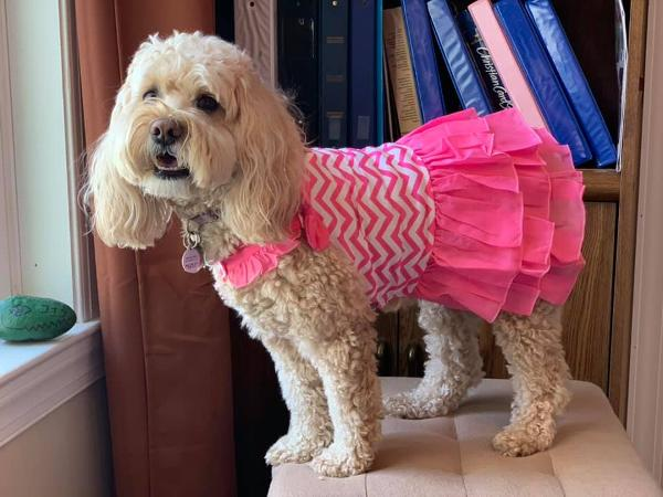 Chevron Dog Dress by Dogo - Pink | BaxterBoo
