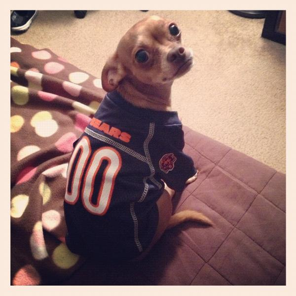 timeless design 7c635 f9fd3 chicago bears jersey for dogs