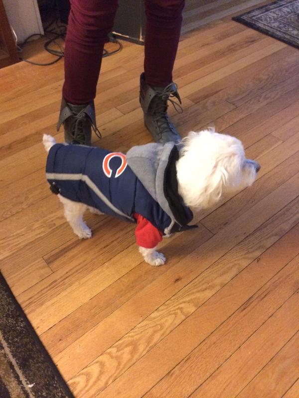 best cheap 38d56 6d944 chicago bears dog jersey