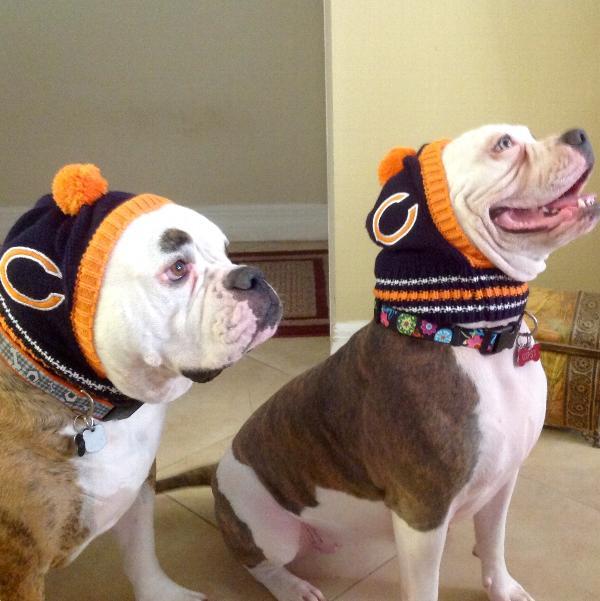 55e5948649d Chicago Bears Knit Dog Hat