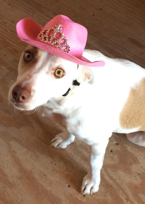 Cowboy Princess Hat Dog Costume - Pink  e3c3dcca19f8