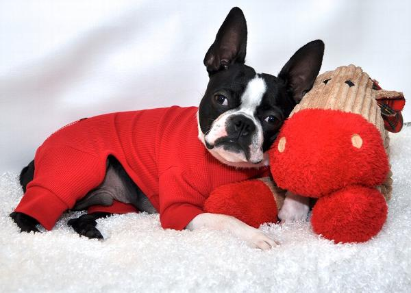 650cde3d127a Cozy Thermal Dog Pajamas - Red