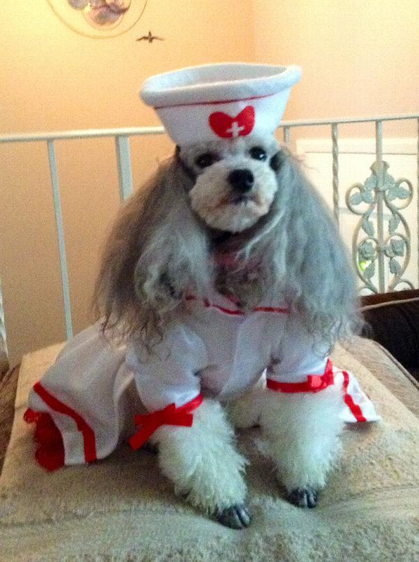 cutie-nurse-halloween-dog-costume-16428.jpg