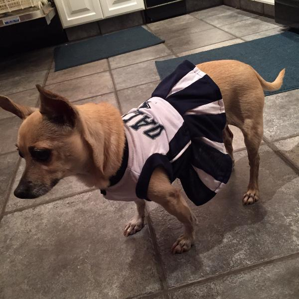 Dallas Cowboys Cheerleader Dog Dress  d048e5304