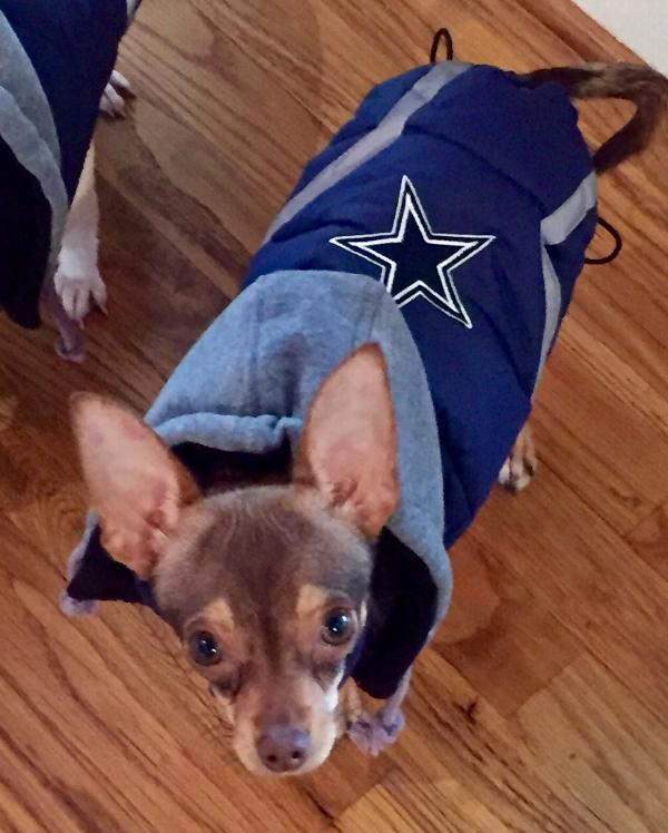 8ebda9ada Dallas Cowboys Dog Puffer Vest | BaxterBoo