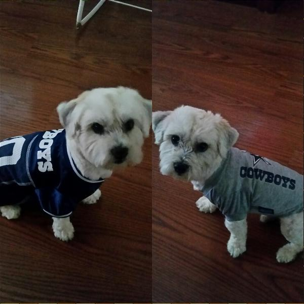 60573535c17 Dallas Cowboys Officially Licensed Dog Jersey... | BaxterBoo