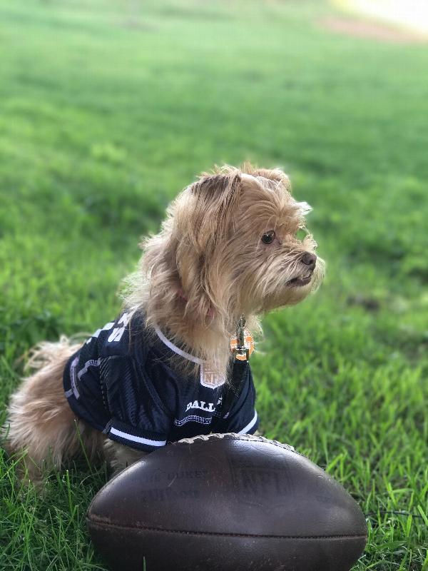 5bc88aed7 Dallas Cowboys Officially Licensed Dog Jersey - White Trim Customer Photos  - Send us your photo! Minnie