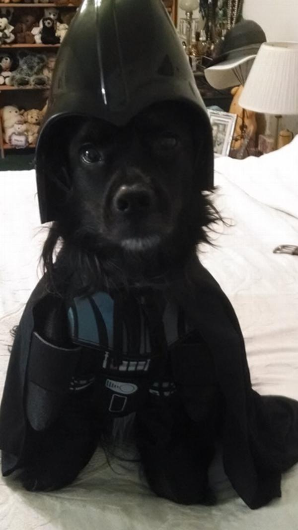 star wars darth vader dog halloween costume with same day shipping