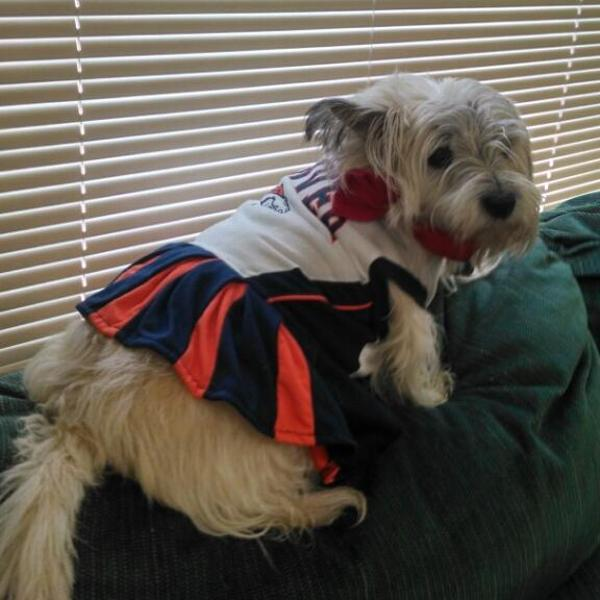 on sale 24ac4 39c5a Denver Broncos Cheerleader Dog Dress