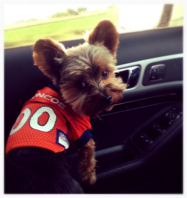 huge discount e923e cc34f Denver Broncos Officially Licensed Dog Jersey - Orange