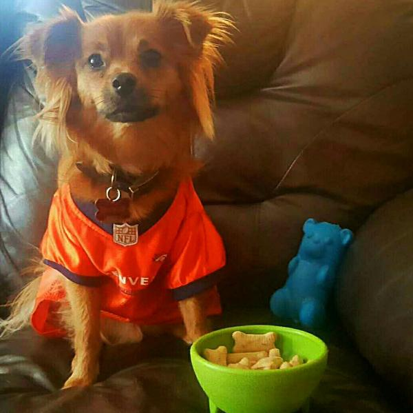 Denver Broncos Orange Pet Jersey | CoolPetStuff