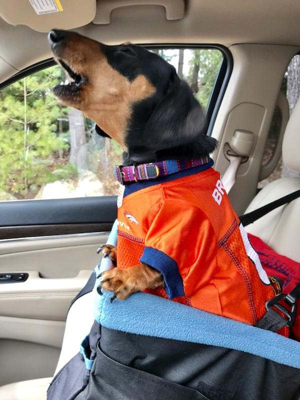 8269928e3 Denver Broncos Officially Licensed Dog Jersey - Orange Customer Photos -  Send us your photo! Chaz