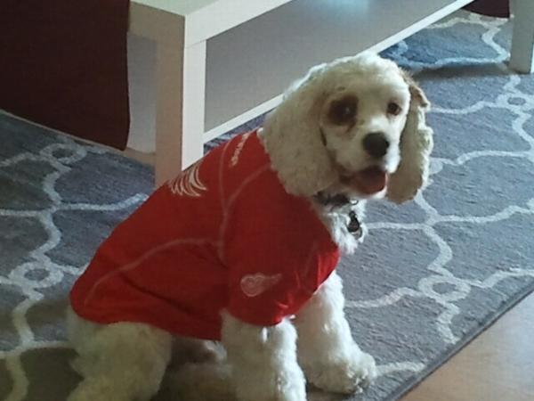 big sale 7cd67 6abbb detroit red wings dog jersey