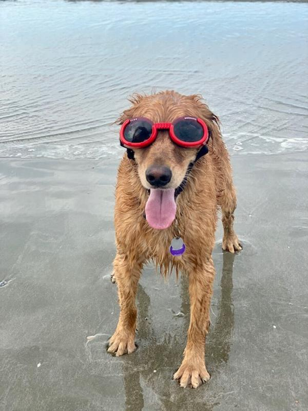 doggles-ils2-shiny-red-frame-with-smoke-lens-35281.jpg