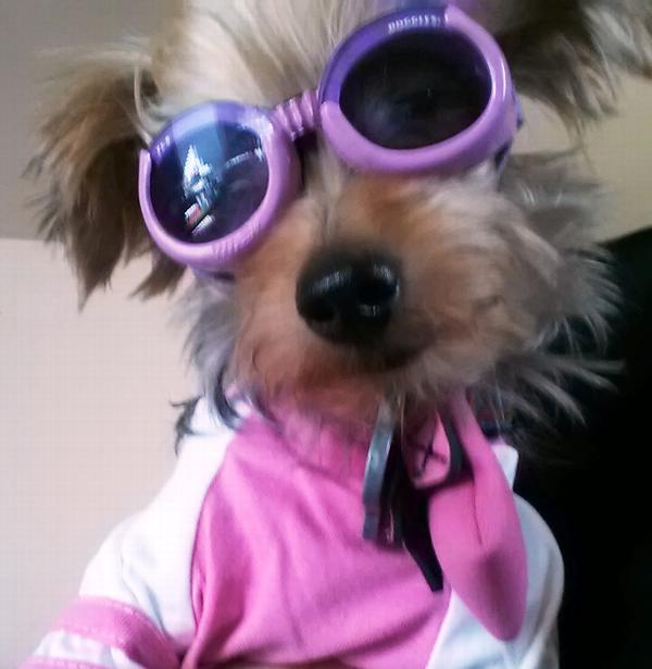 Doggles - ILS Pink Frame with Flowers Lilac L...  86e791b0a0