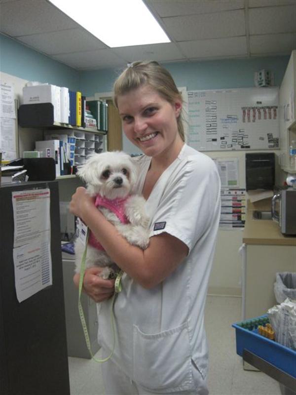 Dotty Dog Harness Vest By Puppia