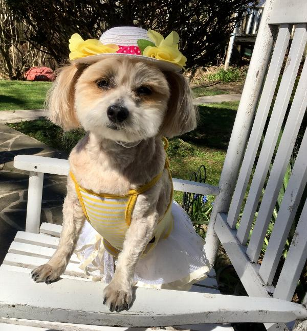 easter-bonnet-dog-hat-34961.jpg