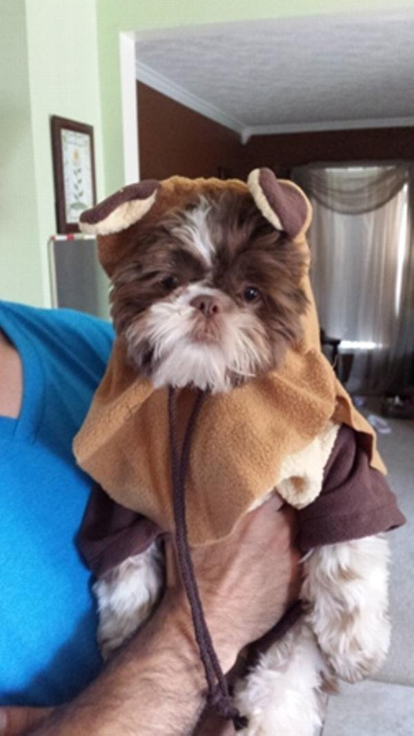 halloween costumes style motivation star wars ewok dog costume with same day shipping baxterboo